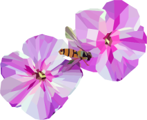 Polygon flowers and insect, 2015 (vector illustration)