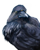 Three-eyed crow, Game of Thrones fan art, for Archipelacon 2015 website.